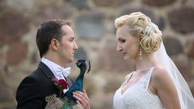 Newlyweds που φωτογραφίζεται με το peacock sunbird απόθεμα βίντεο
