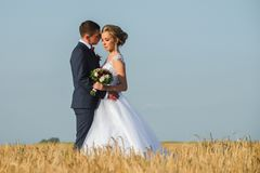 Newlyweds in the field at shallow depth of field stock photos