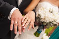 Newlyweds hands. Stock Images