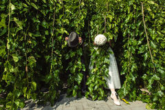 Newlyweds Hiding in Tree. Groom with hat and bride with bouquet in tree branches Stock Photo