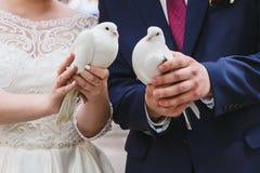 Newlyweds are holding white pigeons stock photos