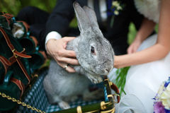 Newlyweds kept a rabbit. The couple holding the gray rabbit from the chest royalty free stock photo