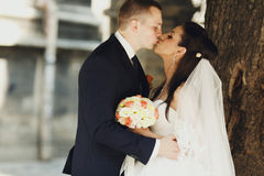 Newlyweds kiss under the tree somewhere in the city. A royalty free stock photos