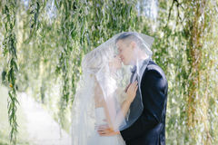 Newlyweds kiss under a veil on background willow Stock Photos