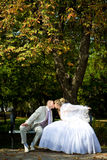 Newlyweds are kissing stock photos