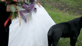 Newlyweds in a park with a black dog stock video footage