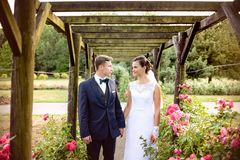 Newlyweds in park rosarium next to beautiful pink roses Royalty Free Stock Photos