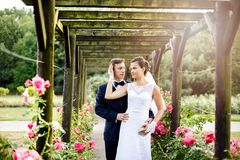 Newlyweds in park rosarium next to beautiful pink roses Royalty Free Stock Image