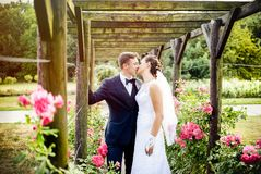 Newlyweds in park rosarium next to beautiful pink roses Stock Photos