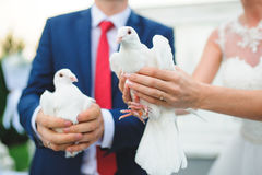 Newlyweds with Pigeons Stock Photos
