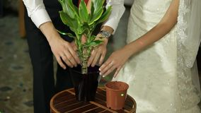 Newlyweds Planting Flovers stock video footage