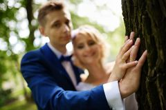 Newlyweds put hands with rings on a tree Royalty Free Stock Image