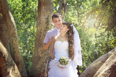 Newlyweds and the sunlight. Young newlyweds embracing in the park in the shadow of giant platan Stock Photos