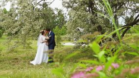 Newlyweds under the branches of a flowering tree stock video