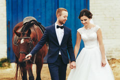 Newlyweds walk with a horse from the stable stock images