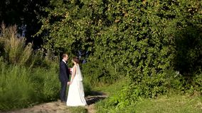 Newlyweds on a walk near an apple tree on a sunny day. HD stock footage