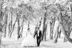 Newlyweds walking in nature bw Stock Photos