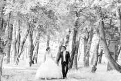 Newlyweds walking in nature bw Stock Photos