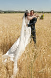 Newlyweds in the wheat field Stock Images
