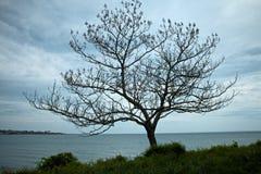 Newport Beach περιπάτων απότομων βράχων Στοκ εικόνα με δικαίωμα ελεύθερης χρήσης