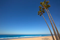 Newport beach California palm trees on shore Royalty Free Stock Photography
