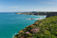 Newquay海岸北部康沃尔郡英国在有蓝天和海的春天 免版税图库摄影
