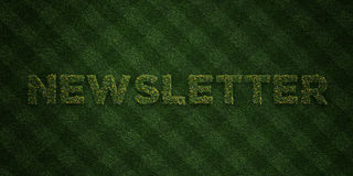 NEWSLETTER - fresh Grass letters with flowers and dandelions - 3D rendered royalty free stock image Royalty Free Stock Photos