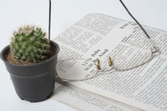 Newspaper. Eye glasses and cactus on a Newspaper Royalty Free Stock Image