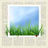 Newspaper with grass Stock Images