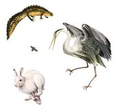 Newt, Hare, Fly, Grey Heron. Isolated realistic illustration on white background Stock Images