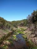 Newton Canyon Stream. Stream in Newton Canyon, Malibu, CA Stock Images