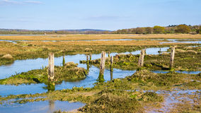 Newtown Harbour National Nature Reserve ö av wighten England Arkivfoton