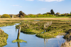 Newtown Harbour National Nature Reserve ö av wighten England Arkivbild