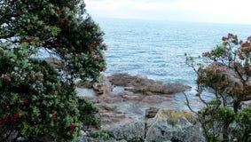 Newzealand. Beach rocks christmastree tree Stock Photography