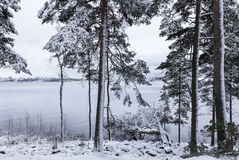 Next to lake at first snow time Stock Photography