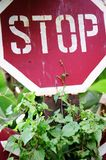 STOP Sign in the Jungle Royalty Free Stock Photos