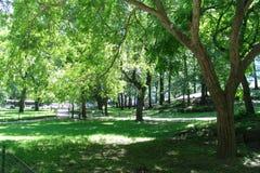 Ney York City. Central Park Trees royalty free stock image