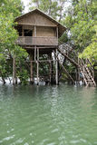 Neyyar河的树上小屋 免版税图库摄影