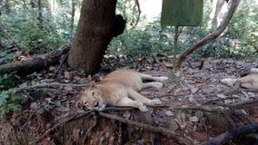 Neyyar djurliv och sanctury, Thiruvananthapuram, Kerala Arkivfoto