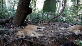 Neyyar djurliv och sanctury, Thiruvananthapuram, Kerala Royaltyfria Foton