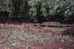 Neyyar Wildlife Sanctuary Stock Images