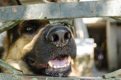 Nez de chien Photos libres de droits