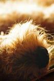 Nez de chien de plan rapproché Photos libres de droits