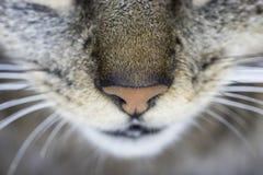 Nez en gros plan de chat vu d'en haut Image stock