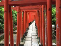 Torii pathway inside Nezu Jinja Shrine royalty free stock images