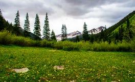 Äng för Snowmass gulingPea Wild Flower Field Rocky berg Royaltyfria Bilder