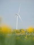 Äng med vindkraftväxten Royaltyfria Foton