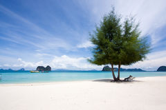 Ngai Island. The pine on beautiful island in andaman sea, thailand Royalty Free Stock Photo