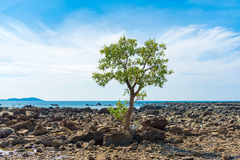 Ngapali beach, Myanmar. Lonely tree. Copy space for text. Royalty Free Stock Photography