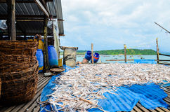 NGAPALI, MYANMAR- SEPTEMBER 25, 2016: The process of drying fresh fish in the sun, an ancient method of food preservation in Ngapa Stock Image
